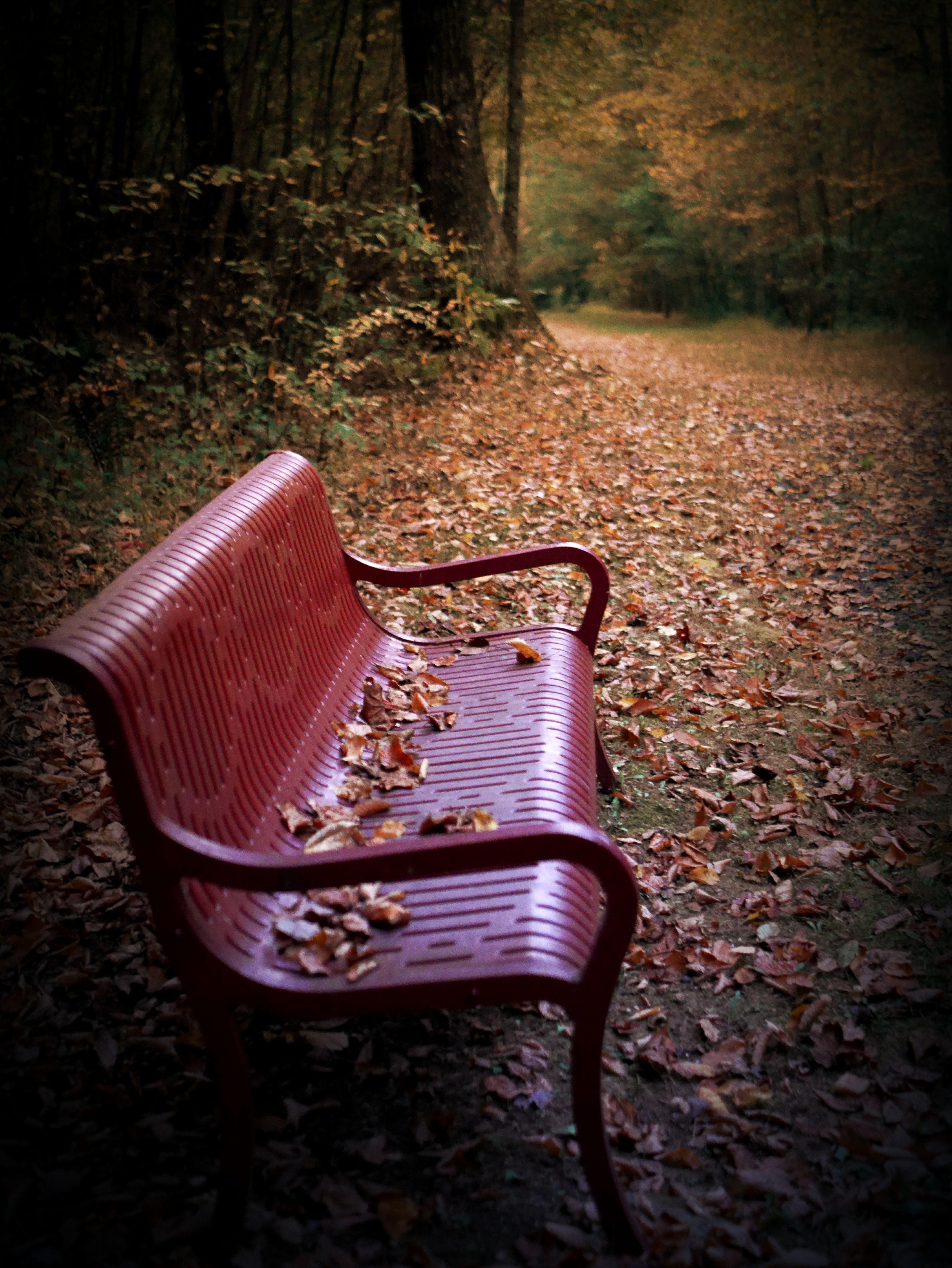 Sedie Da Giardino Americane.Fall Walk Panchine Autunno
