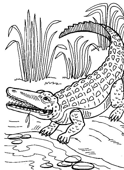 Crocodile Coloring Pages To Print Coloring Pages To Print