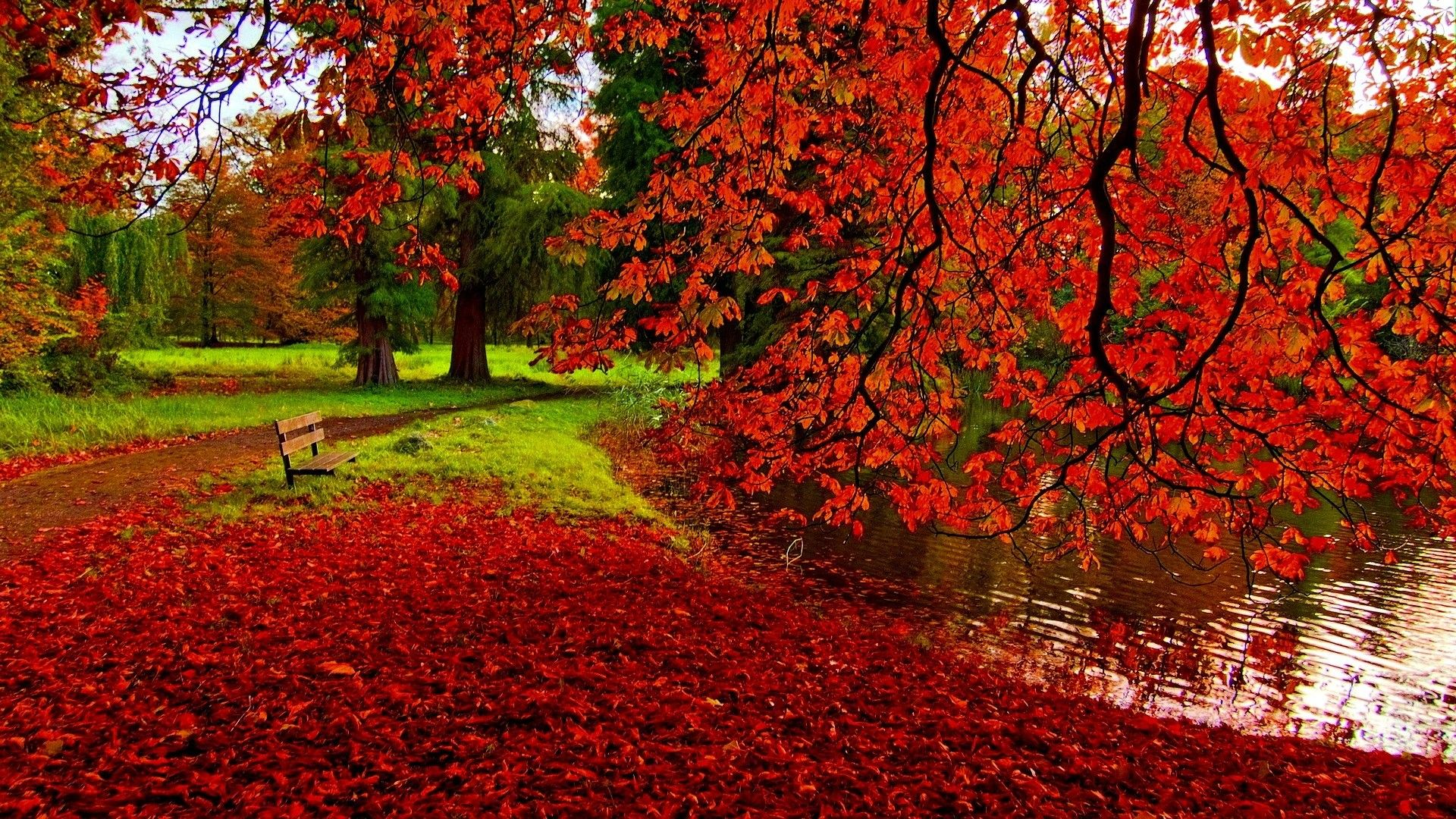 Epingle Par Krikri Sur Iphone Wallpapers Feuilles Rouges Photo Magnifique Paysage Automne