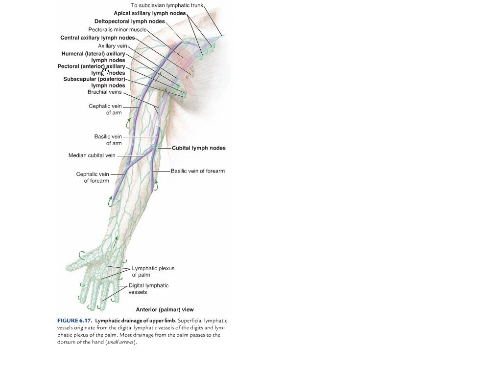 Tendons of the Hand Within the structure of the hand there are many ...