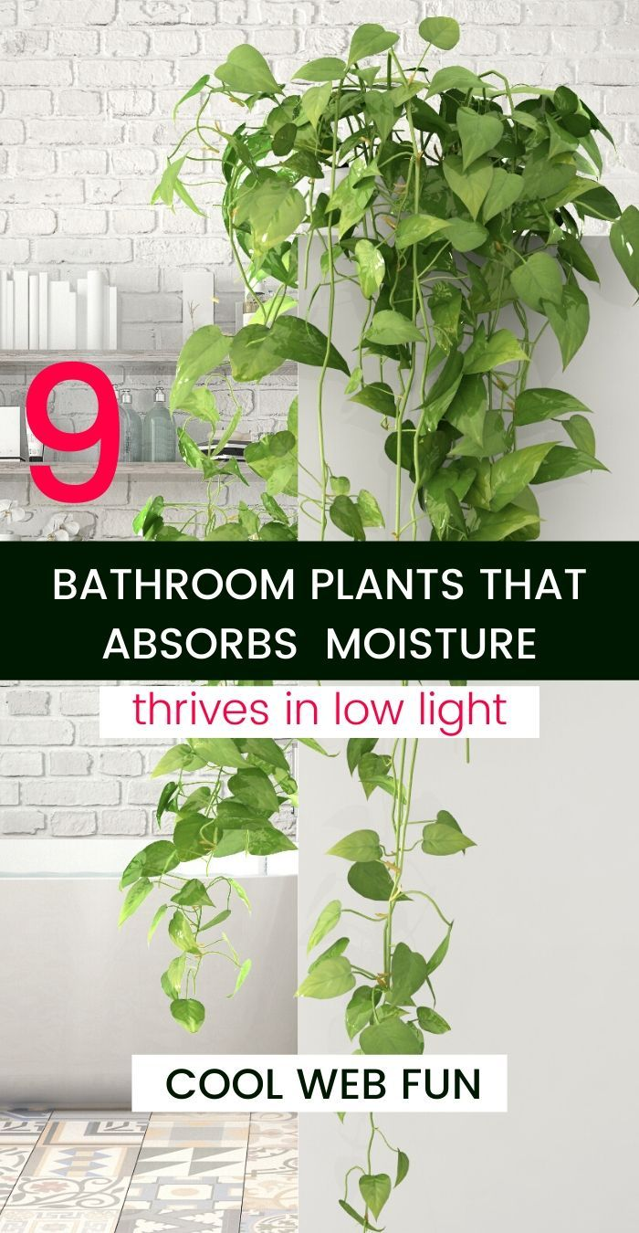 Photo of 9 Low Light Houseplants for Bathroom – Cool Web Fun