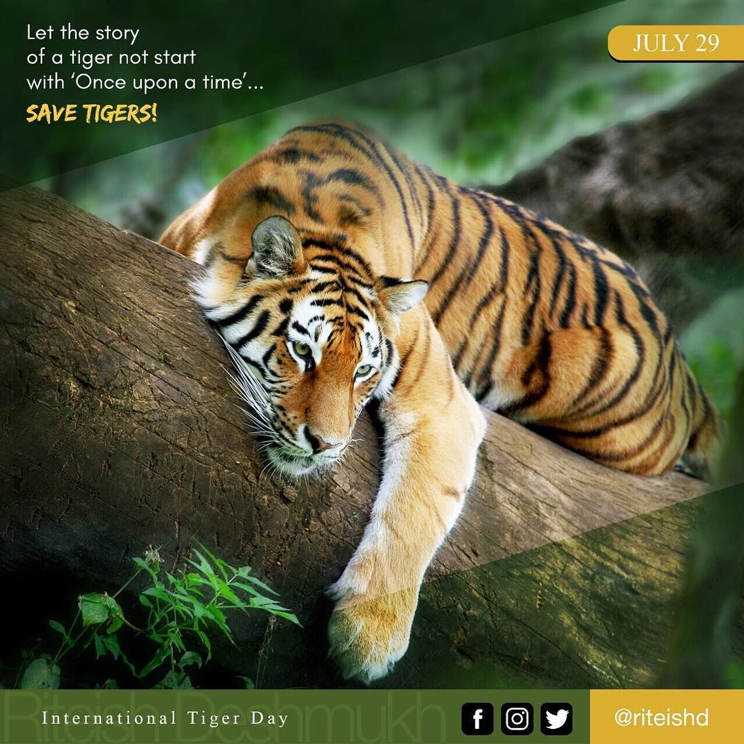 Let The Story Of A Tiger Not Start With Once Upon A Time