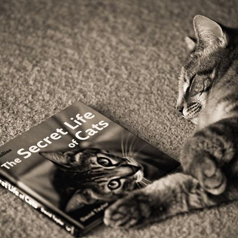 صور خلفيات قطه قطط حياة جميله رمزيات Cats Cat Animal Pictures Pets Cats