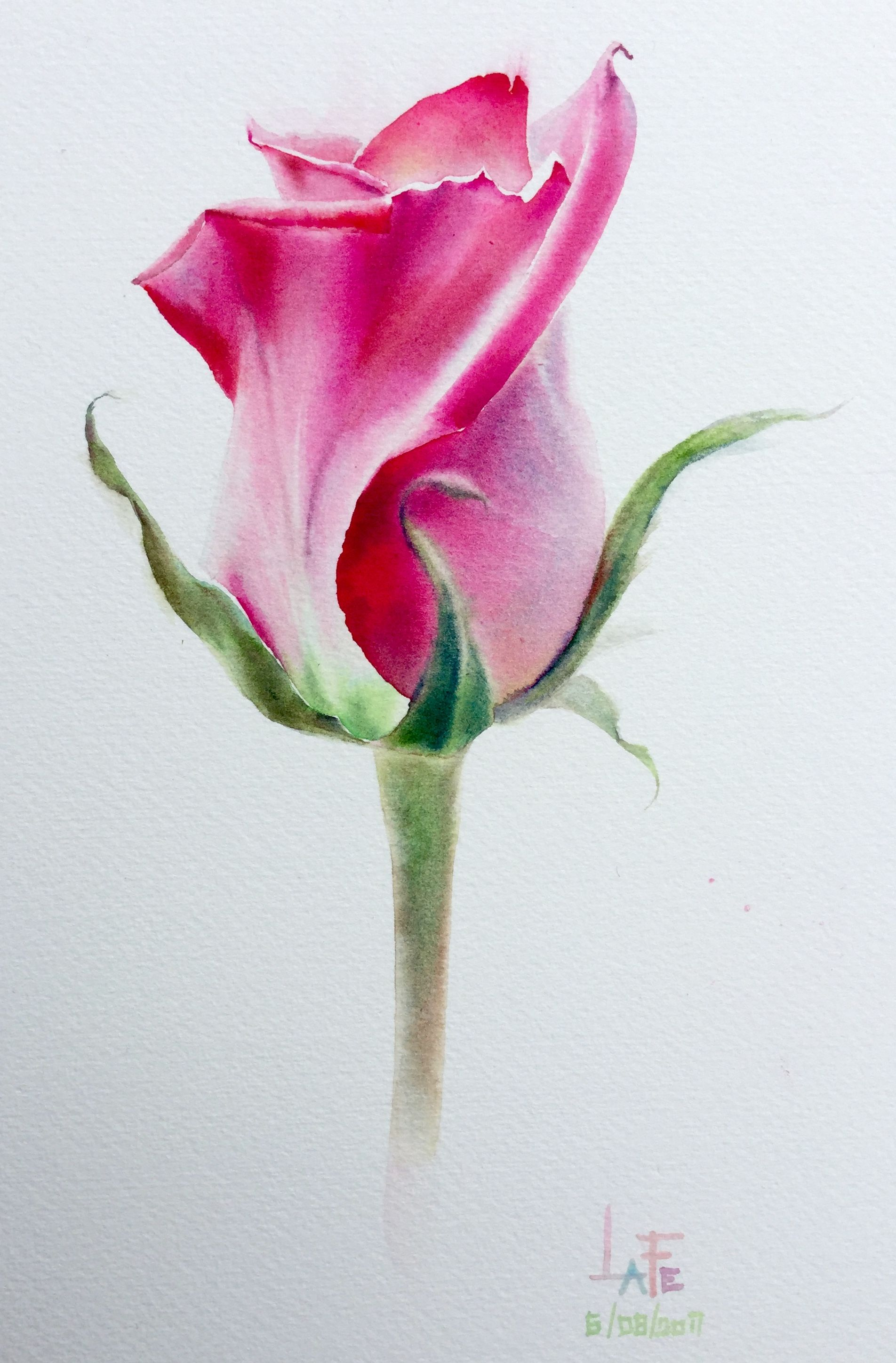Watercolor Without Drawing Rose By Lafe Flower Painting