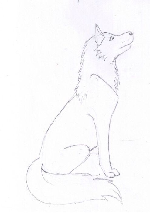 Simple wolf sketch | Wolf drawings | Pinterest | Wolf ...