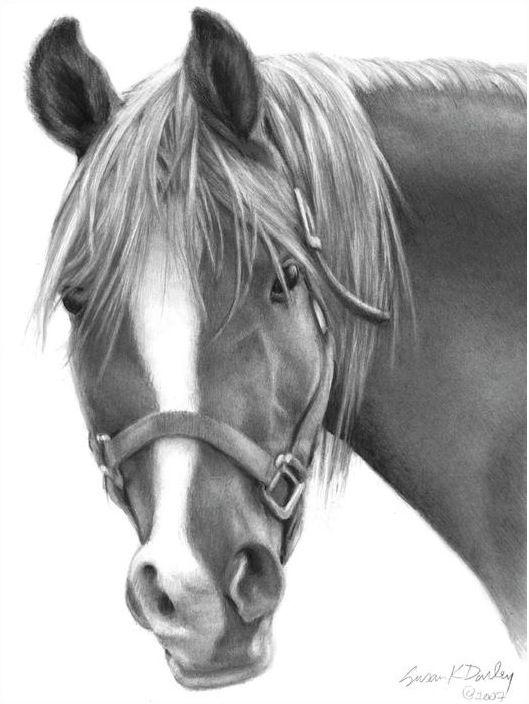 Mama Rosa Arabian Horse By Susan Donley Cavalo Desenho