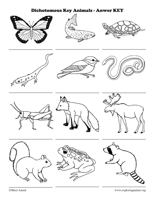 Learn About Animals On Exploringnature Org