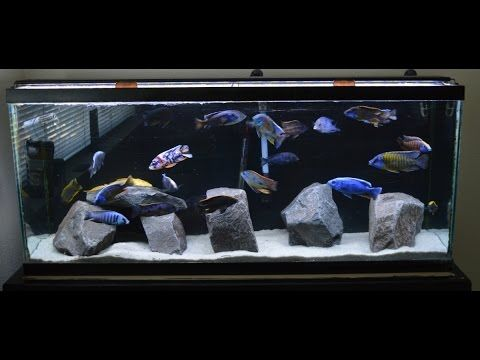 African Cichlids | New Rock Scape | Craigslist Fish Score | LAST DAY