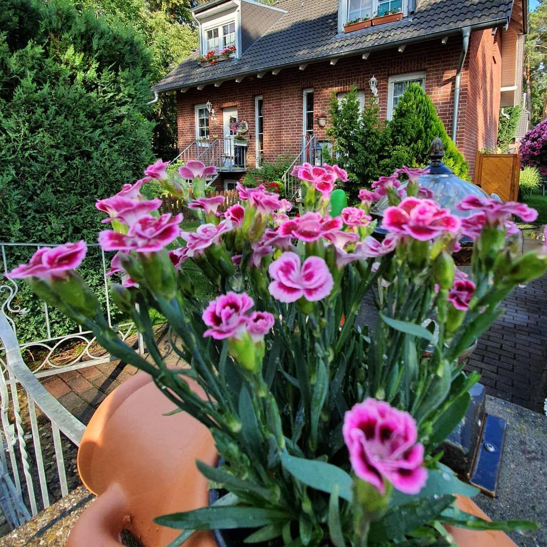 Garden Garten Gartengestaltung Gartenideen Sommer Sommer2019 Sommer2019 Sunset Sun Landscape Landscapephotography Garten Deko Gartenarbeit Garten