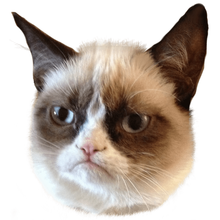 7a6b3b4fa5d4c2c87d14ff848de51028 Grumpy Cat Head Transparent Png Stickpng Grumpy Cat Clipart 746 746 Png 746 746 Cat Memes Cats Funny Cats And Dogs