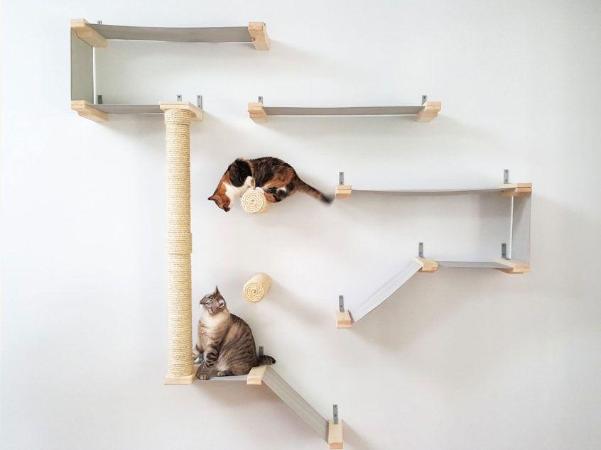 cat room cat cats kitten kittens ideas cattery interior