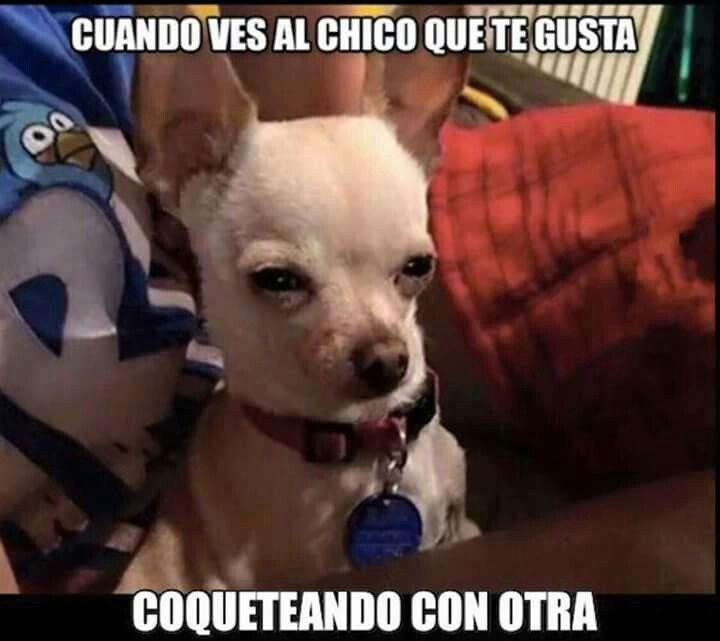 Pin De Lux2u En Humor Chistes Graciosos De Animales Memes Divertidos Memes De Perros Chistosos