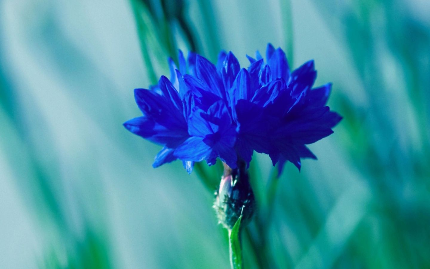 Blue flowers related keywords suggestions blue flowers long blue flowers related keywords suggestions blue flowers long izmirmasajfo