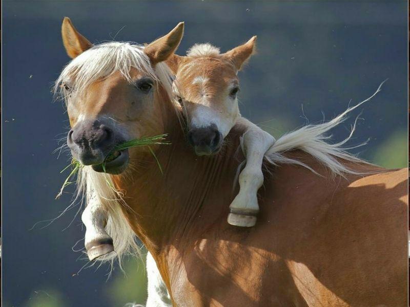 صور خيول انستقرام اجمل صور من انستجرام احصنة عربية شامخة حصان Cute Wild Animals Baby Horses Horses