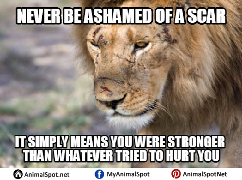 Funny Leo Zodiac Memes : Lion quotes memes different types of funny animal memes