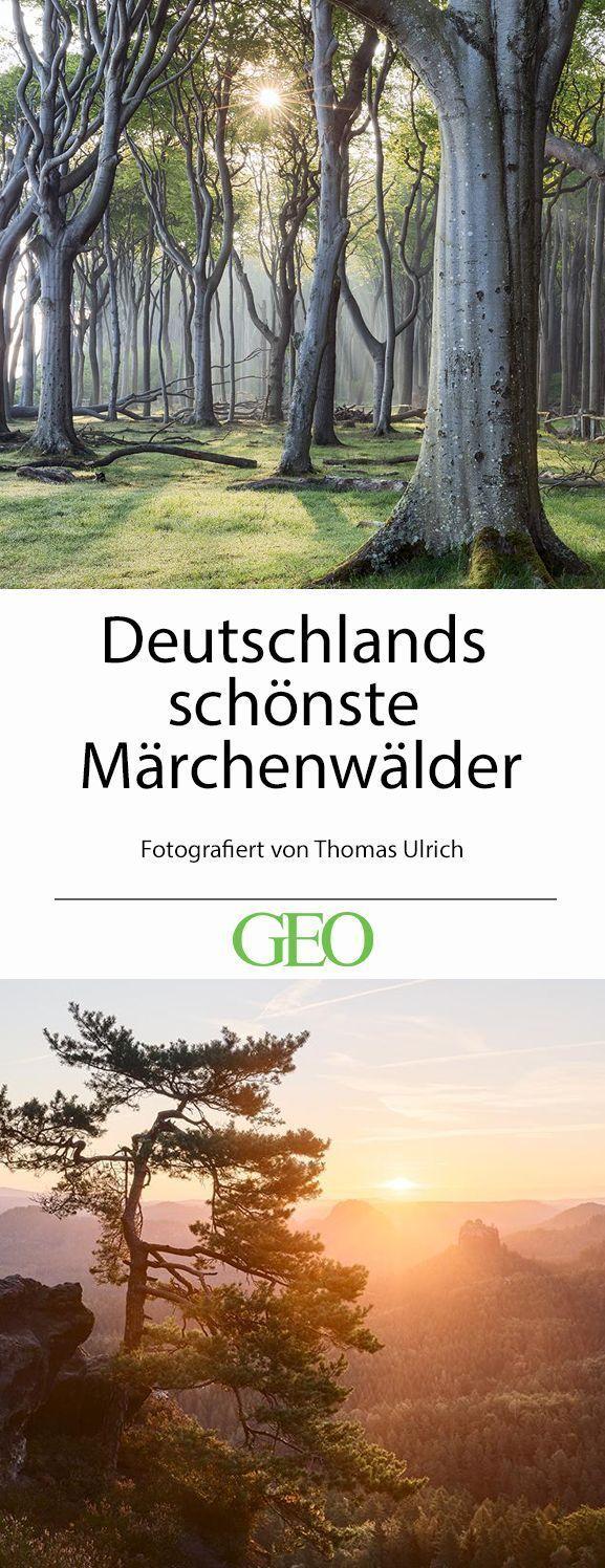 Leserfotograf des Monats: Deutschlands schönste Märchenwälder