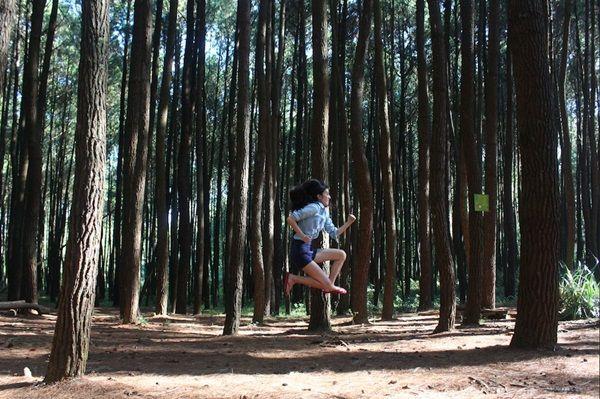 hutan pinus mangunan ala film twilight