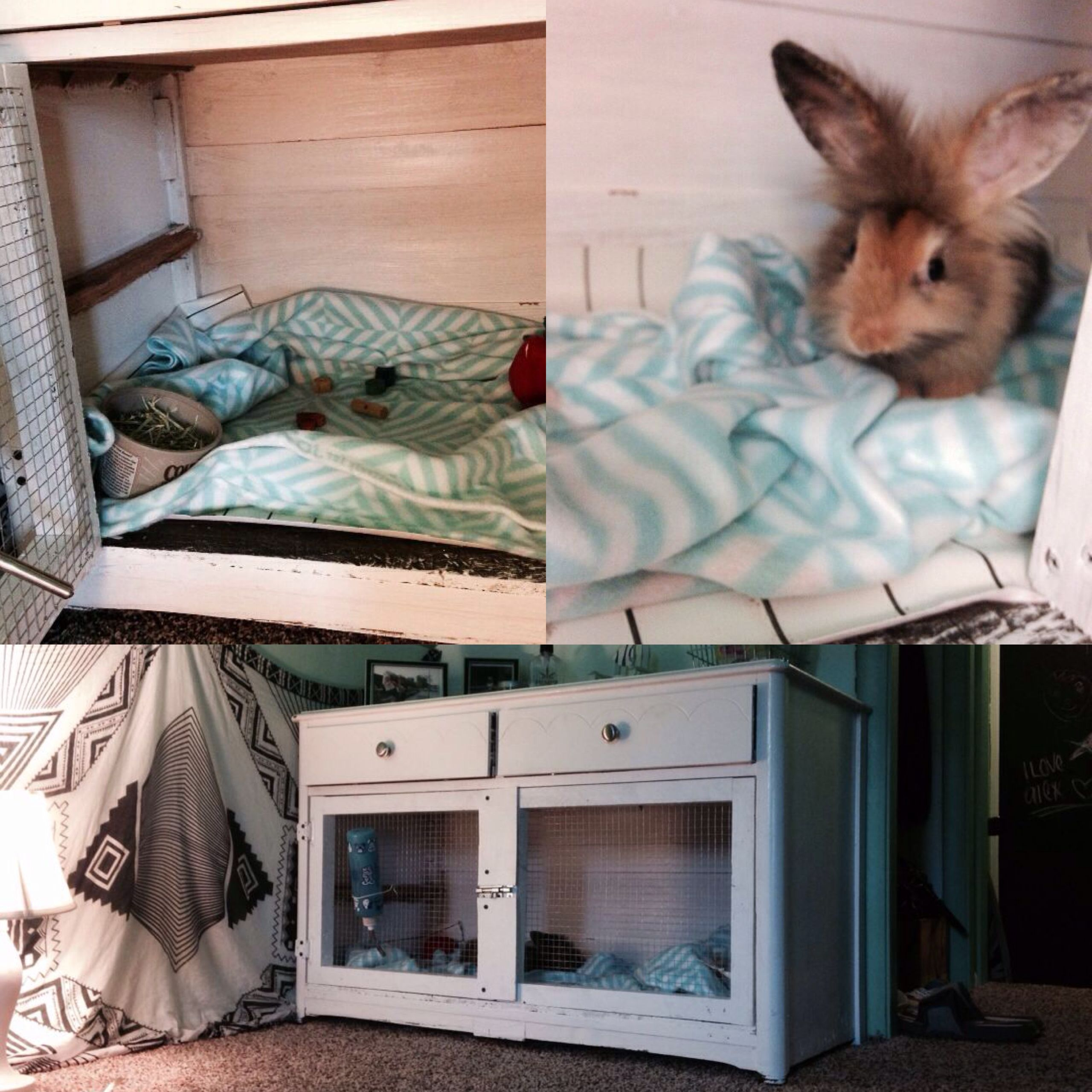 Rabbit diy hutch cage from dresser chicken coops for Guinea pig dresser cage