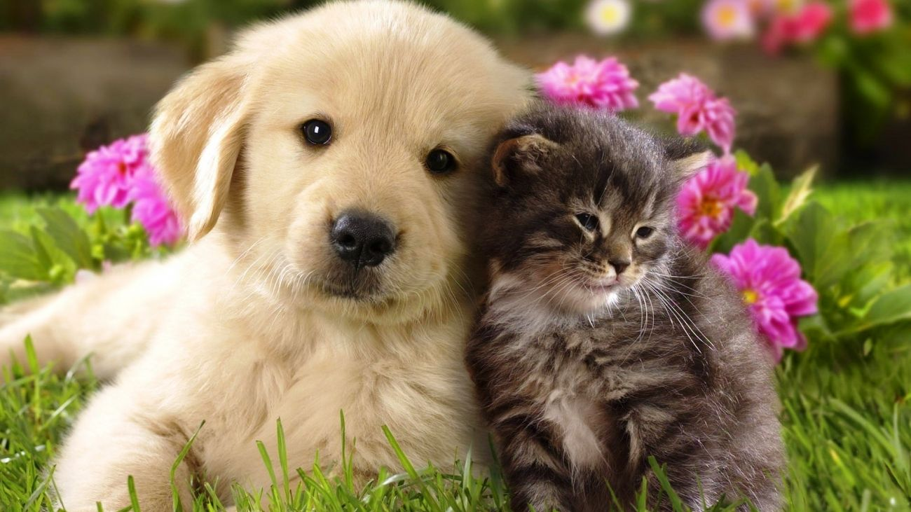 Download Free Cat And Dog Wallpaper For Mac High Quality Hd Wallpaper In 2k 4k 5k 8k 10k Resolution For Yo Cute Animals Puppies Cute Cats And Dogs Dog Pictures