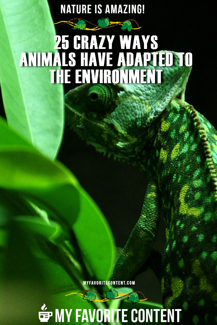 to the wild and crazy world of how animals adapt