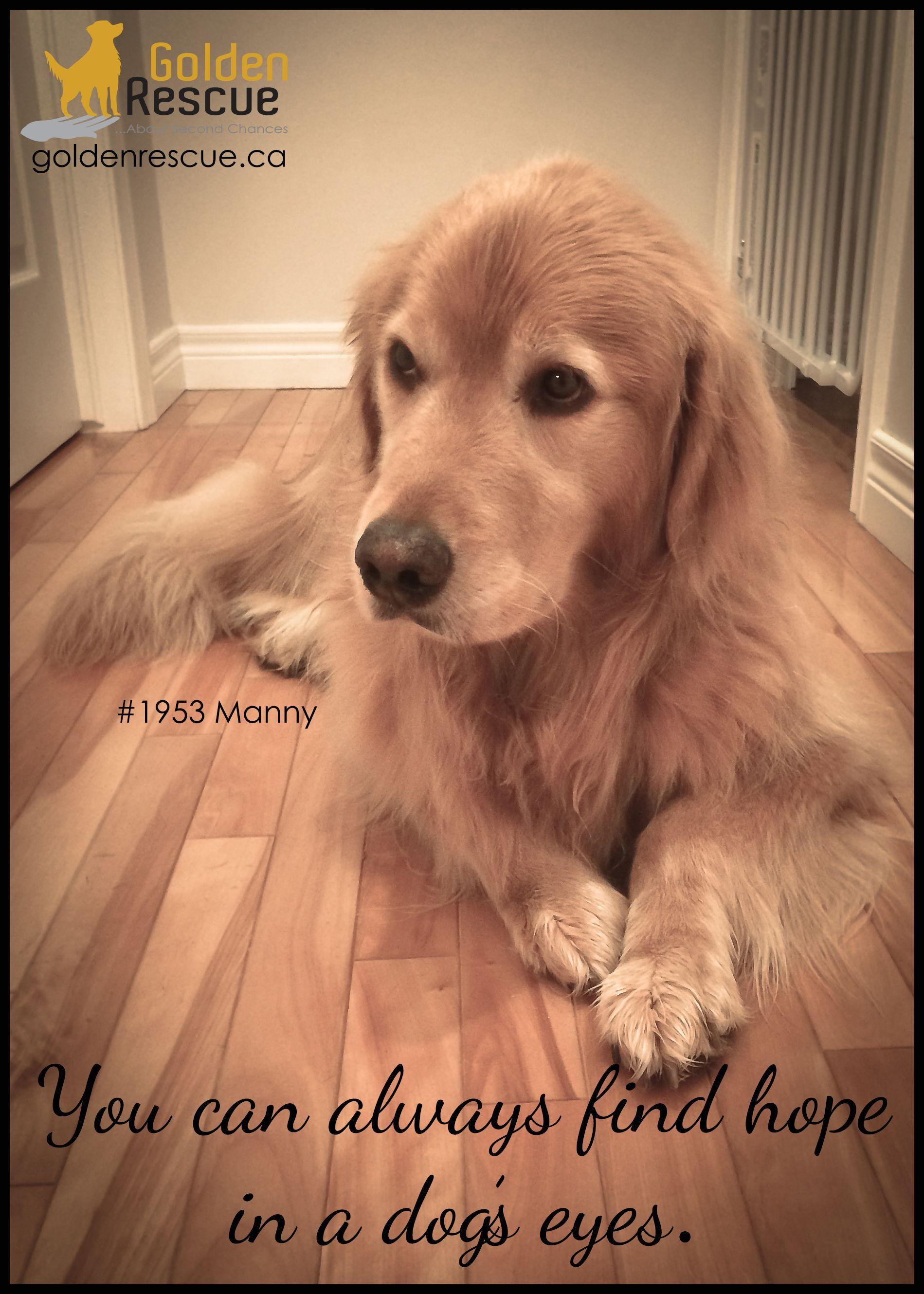 This Is So True Golden Retriever Retriever Puppy Golden