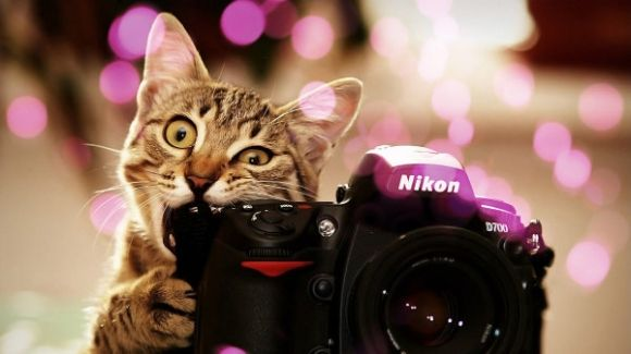 PhotoKitty