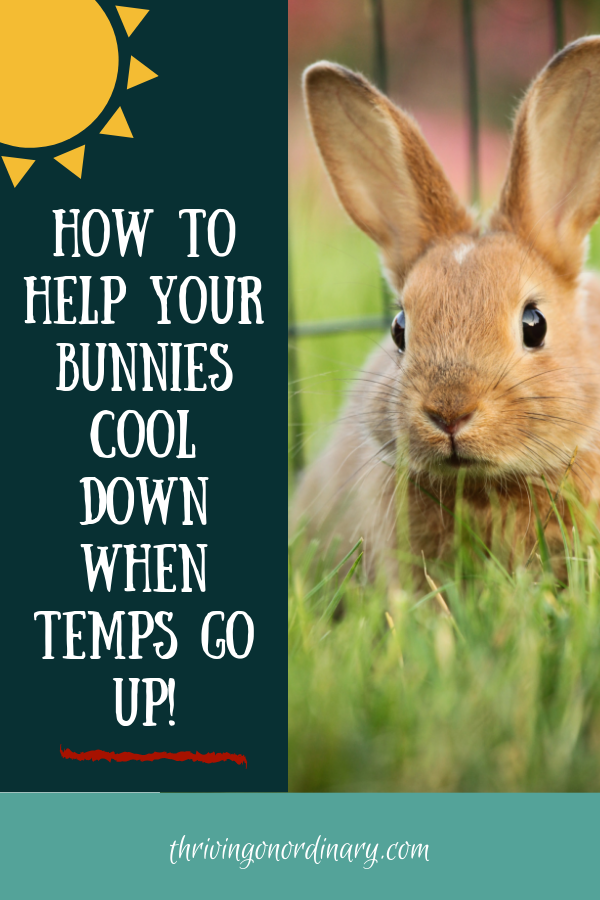 Hot Weather Care for Rabbits - Raising rabbits, Hot weather, Pet bunny, How to get abs, Rabbit, Rabbit care - With temperatures soaring how do you keep your rabbits from getting heat stroke  Keep reading for tips on hot weather care for rabbits
