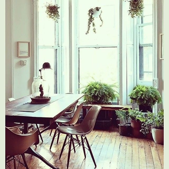 plants   INSTAGRAM