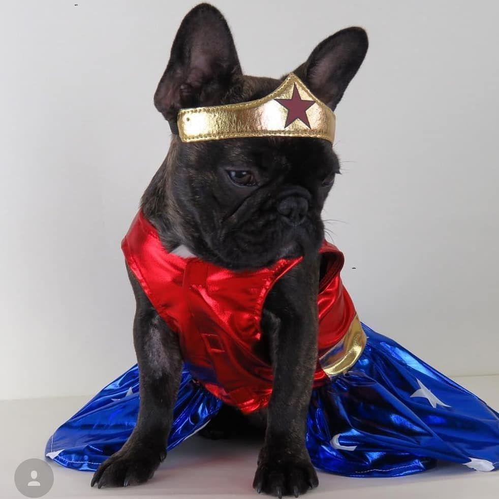 Pet Dog Or Cat Wonder Woman Fancy Dress Costume Official Licensed