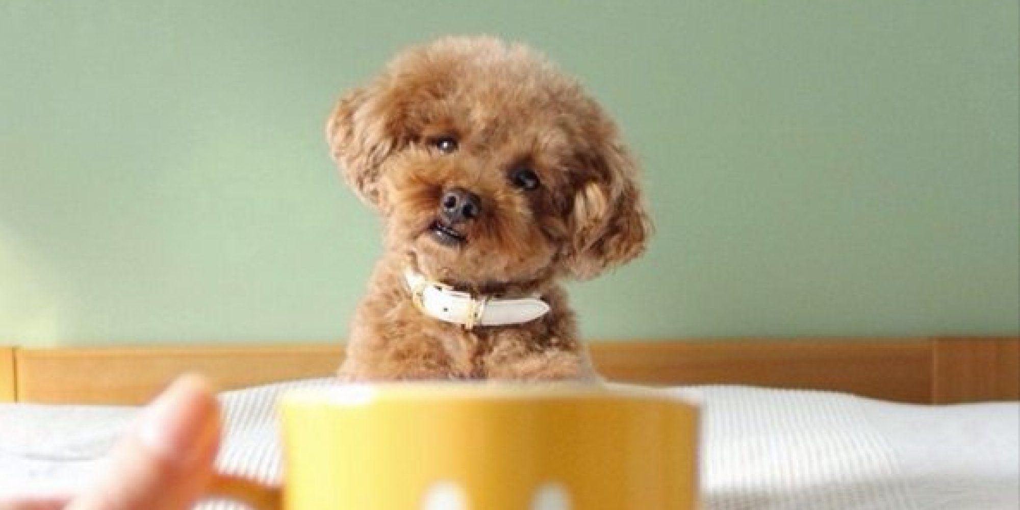 Dog mugging!