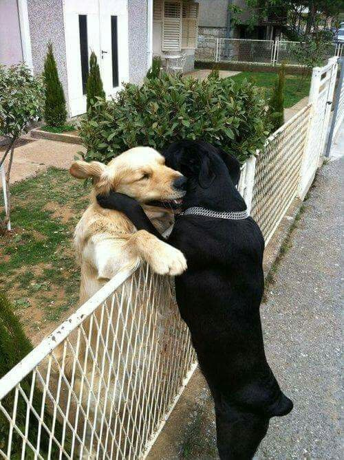 Gives His Best Friend A Hug Whenever He And His Master Walks By