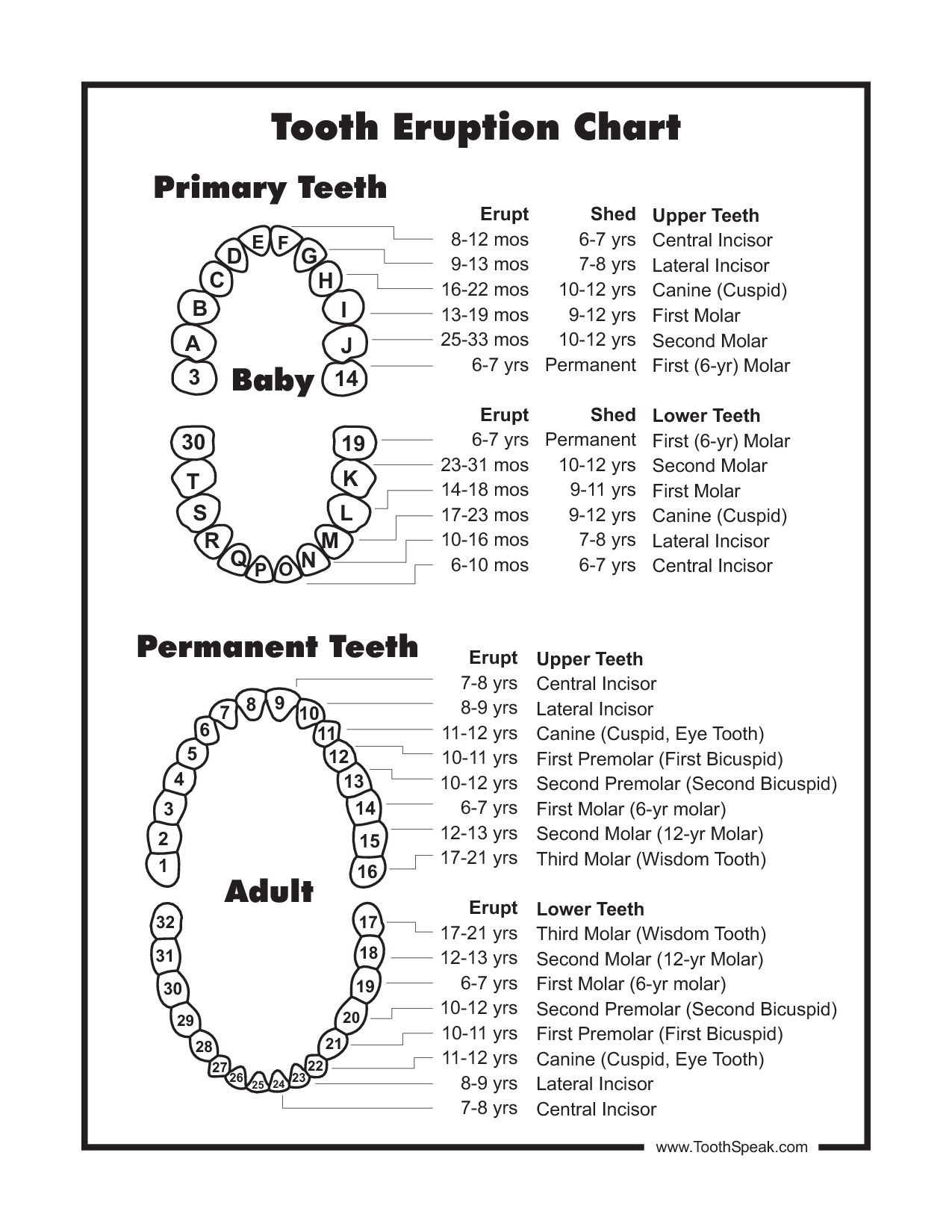 Primary Tooth Chart