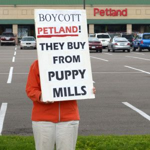 Petland Must Stop Supporting Cruel Puppy Mills Puppy