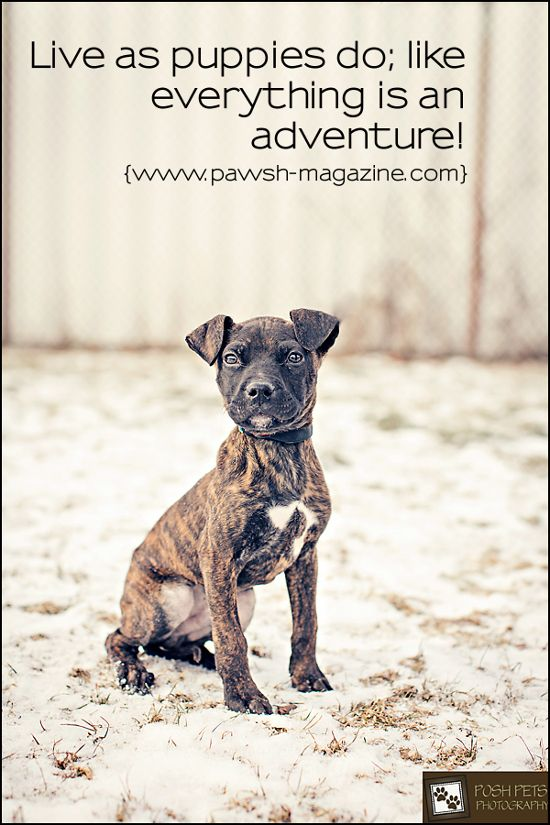 Some Puppy Goodness Puppy Quotes Dog Quotes Dog Magazine