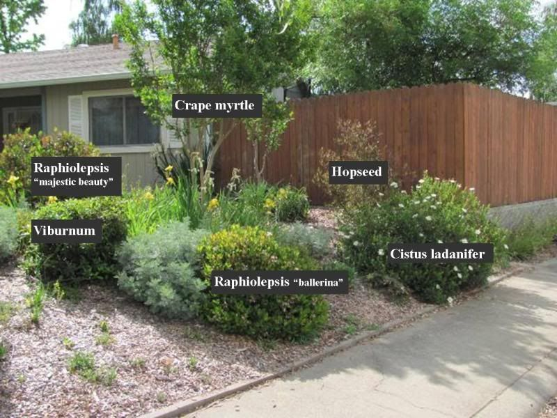 Landscape ideas rose of sharon google search landscape for Low maintenance shrubs full sun