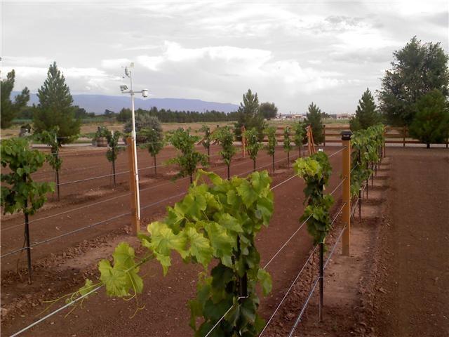 Best Organic Fertilizer For Grape Vines