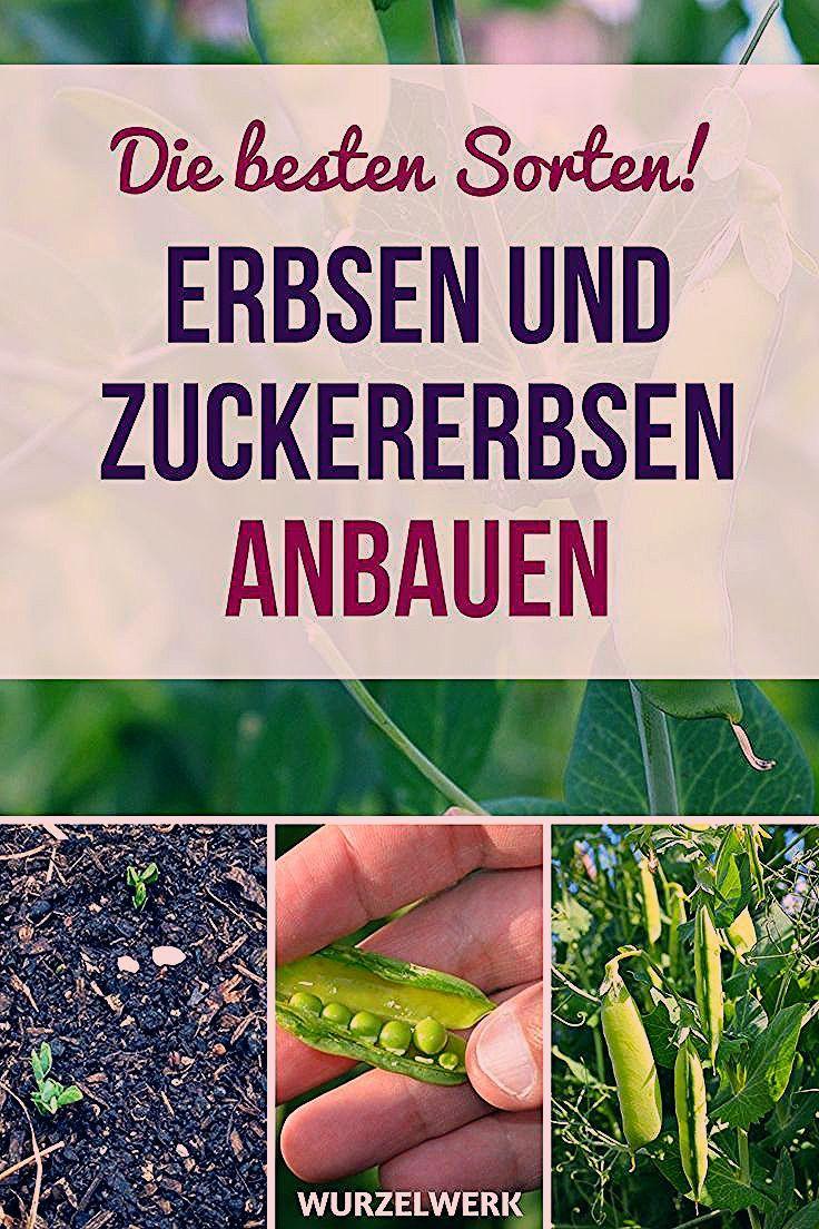 Photo of Erbsen & Zuckererbsen pflanzen und anbauen – Wurzelwerk