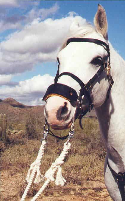 Our Hackamore has a wide leather noseband that is lined with a top quality sheepskin. The short shank allows your horse to eat and drink freely on the trail.