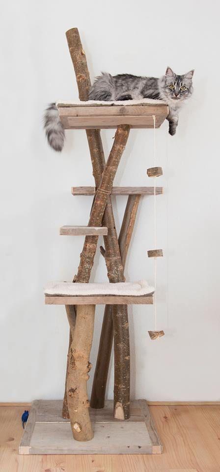 pin von mirjam verhulst auf beestenboel pinterest katzen kratzbaum katze und katzen spielzeug. Black Bedroom Furniture Sets. Home Design Ideas