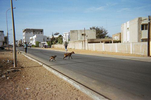 Crosswalk (Dakar, Senegal)