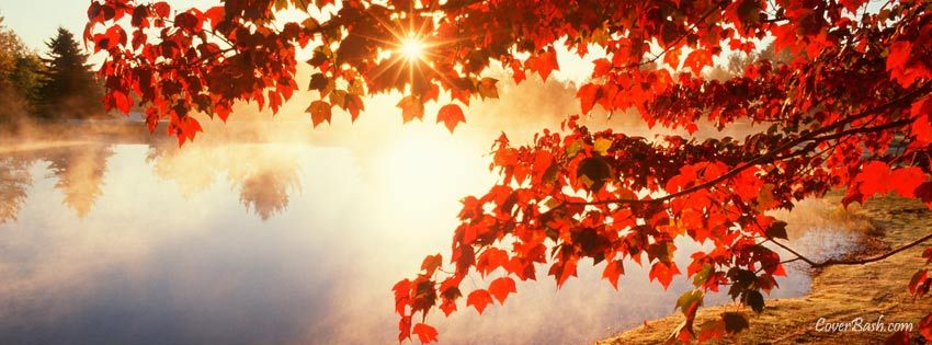 Red Autumn Leaves Facebook Cover Coverbash Com Fall Facebook Cover Photos Fall Facebook Cover Fall Cover Photos