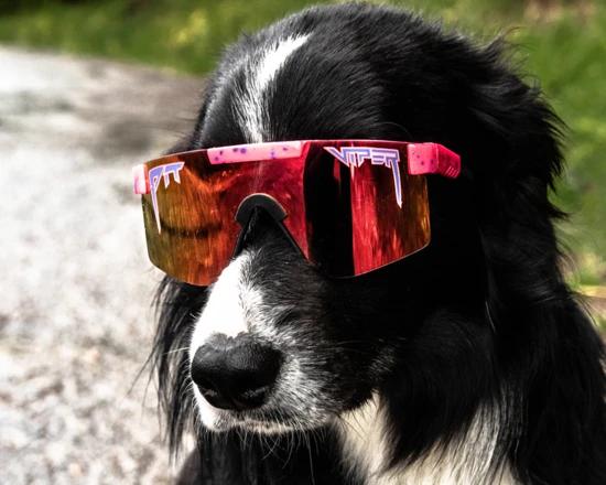The Radical Polarized Pit Viper Sunglasses Pit Viper Pit Viper Sunglasses Viper