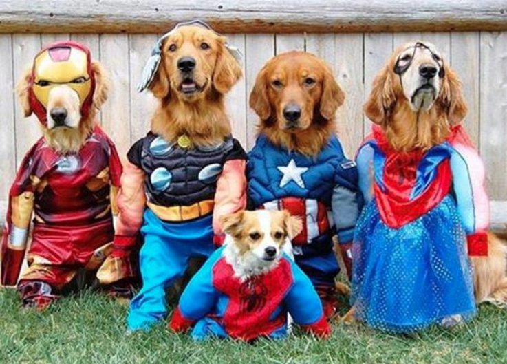 11 Superhero Costumes For Pets Cuteness Halloween