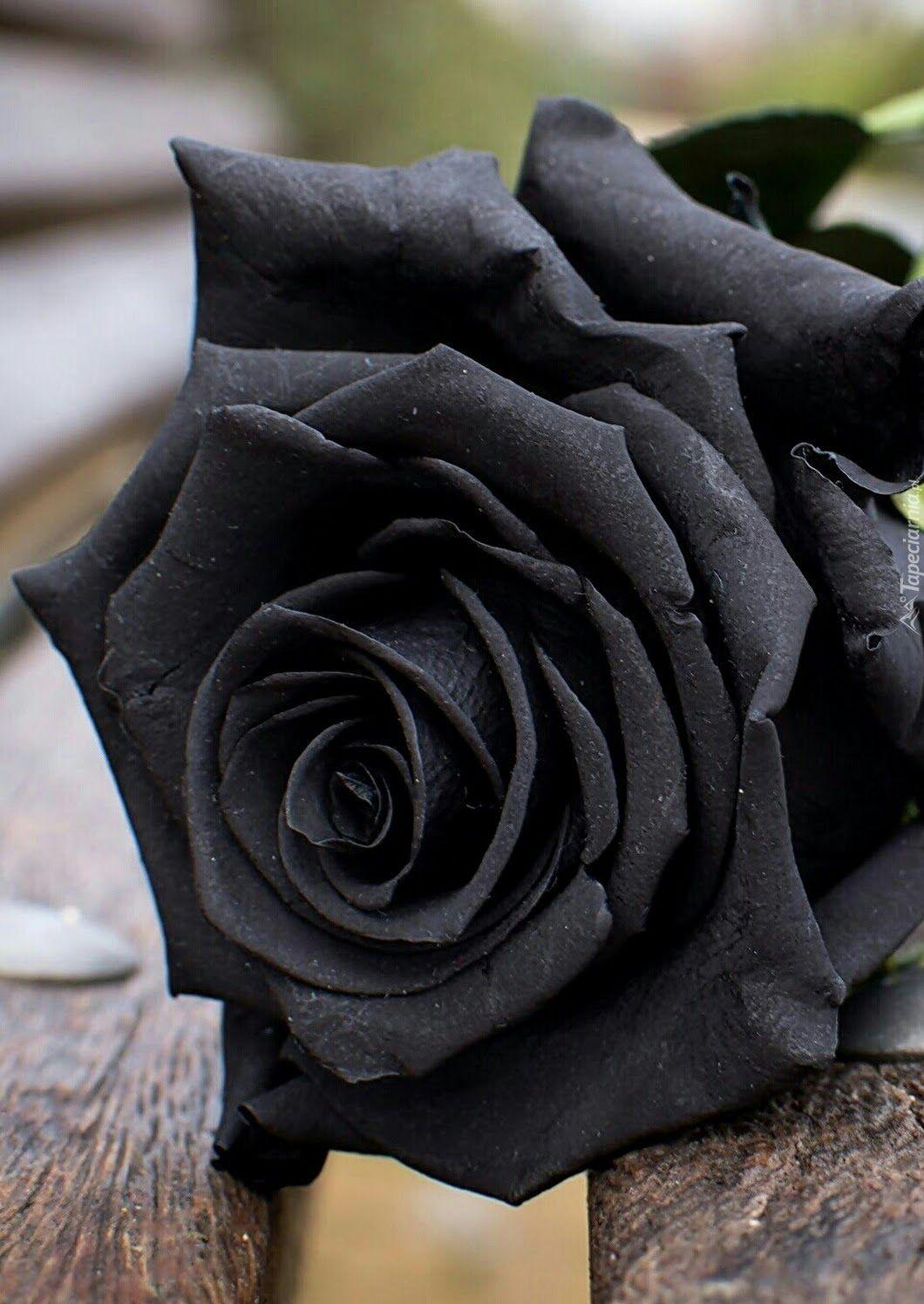 Sign In Black Rose Flower Beautiful Rose Flowers Black Rose