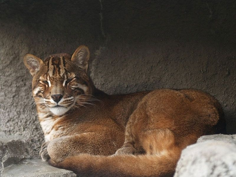 Burning Wildlife Sanctuary in Manipur, India Rare cats