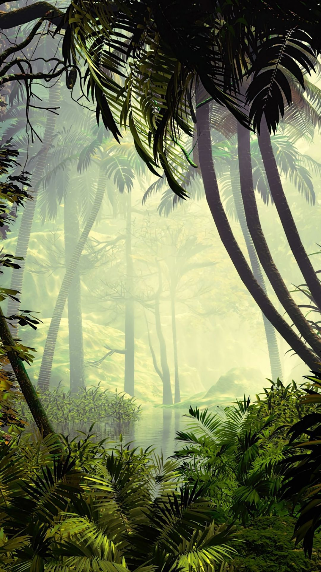 Vegetation Nature Tree Forest Natural Environment Jungle