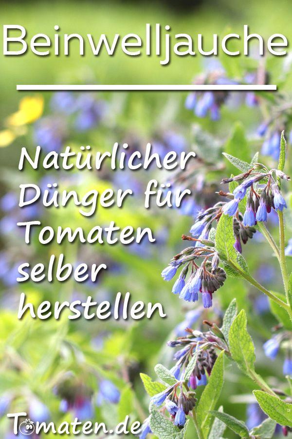 Photo of Beinwelljauche für Tomaten herstellen – Anleitung