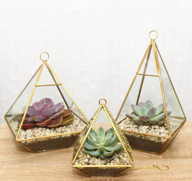 These succulents in diamond holders.   27 Terrariums That Will Restore Tranquility To Your Home