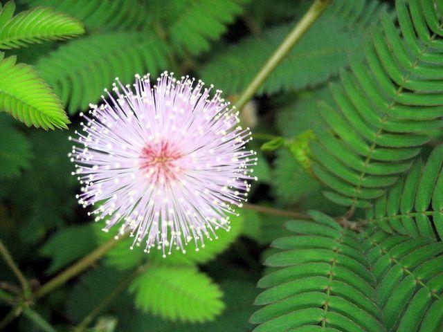 Flowery Impressions India Goa Glowing Flowers Flowers White Gardens