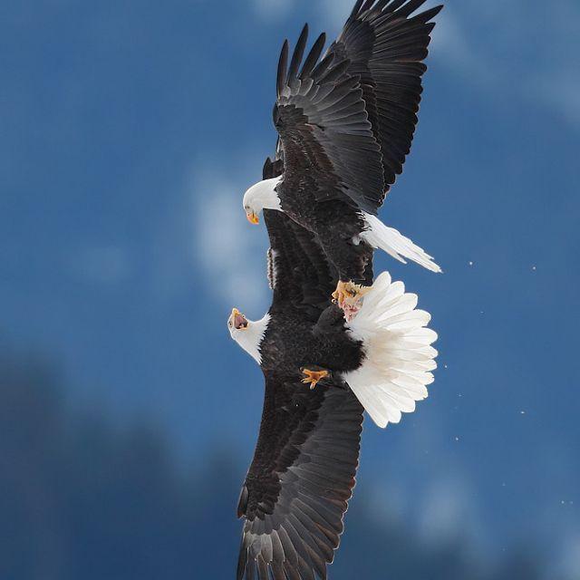 Aerial Acrobatics By Ari Hazeghi